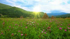 summer landscape - stock footage