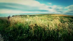 Green Field by Ocean Crand Shot Stock Footage