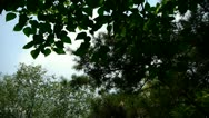 The dense foliage covered sky. Stock Footage