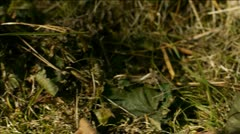 Close up tracking shot of woodland floor ending at a pine cone. Stock Footage
