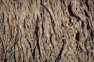 Palm tree background Stock Photos