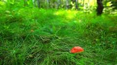 Mushroom in green grass Stock Footage
