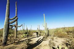 Cactus park Stock Photos