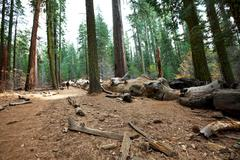 Mariposa grove, yosemite Stock Photos