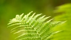 Closeup of a green fern leaf Stock Footage