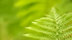 Stock Video Footage of Close-up of a fern leaf in the wind