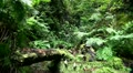 Rainforest nature 20110429 144742 HD Footage
