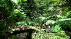 Rainforest nature 20110429 144742 Stock Footage
