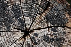 tree-rings - stock photo