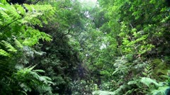 Madeira Jungle 20110429 145145 Stock Footage