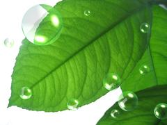 Green lemon leaf with abstract air bubbles Stock Photos