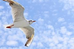 seagulls flight - stock photo