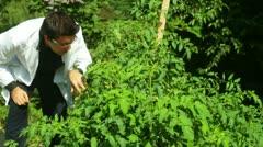 Plant scientist science botanist Stock Footage