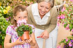 Garden shop child with grandmother smell cyclamen Stock Photos
