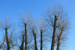 truncated of treetops - stock photo