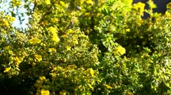 Green summer plant with yellow blooms in the sun Stock Footage