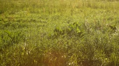Warm summer meadow background - stock footage