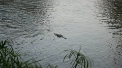 AFRICAN SWIMMING CROCODILE Kenya, Africa Stock Footage
