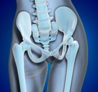 medical illustration pelvis region - stock illustration
