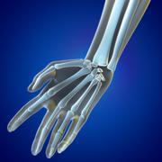 medical illustration wrist region - stock illustration