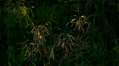 Natural meadow close-up in the evening, dark blurred background Stock Footage
