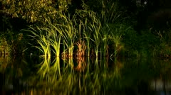 Lake shore, plants reflections, calm water in the evening Stock Footage