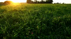 Green field at sunset, natural meadow, sun beams - stock footage