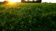 Green field at sunset, natural meadow, sun beams Stock Footage