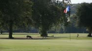 Stock Footage - HD1080p - White tail Deer grazing on Texas Golf Course Stock Footage