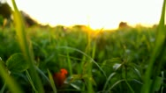 Walking through the grass in the meadow Stock Footage