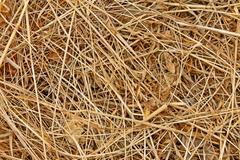 dried haydried hay - stock photo