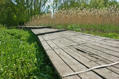 Old wooden pier on the marsh in reeds Stock Photos