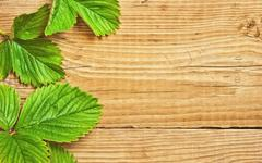 strawberry leaves on a wooden background - stock photo
