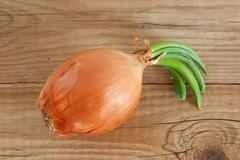 onion  on wooden background - stock photo