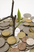 Coins and plant. Stock Photos