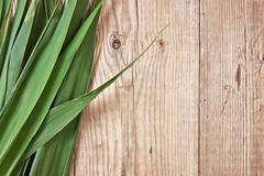 Green leaves on  a wooden wall Stock Photos