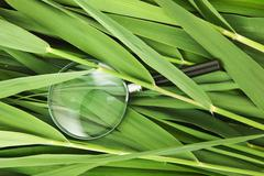Stock Photo of magnifying glass on leaves of cane