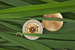Stock Photo of compass glass on  leaves of cane