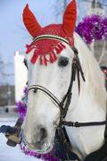 The white horse in a colourful costume. Stock Photos