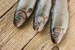 rainbow trout on a wooden board - stock photo