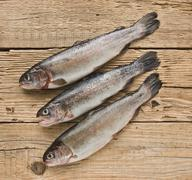 Rainbow trout on a wooden board Stock Photos