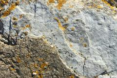 stone partially covered with lichens - stock photo