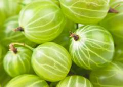 Stock Photo of gooseberry