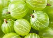 Stock Photo of gooseberry