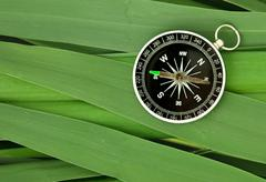 compass on  leaves of cane - stock photo
