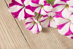 Stock Photo of flowers on wooden background