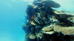 Underwater view Stock Footage