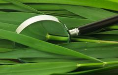 magnifying glass on  leaves of cane - stock photo