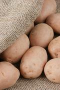 Stock Photo of potato