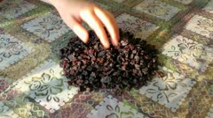 Hands of the child suffice sweet and tasty raisin full handfuls Stock Footage